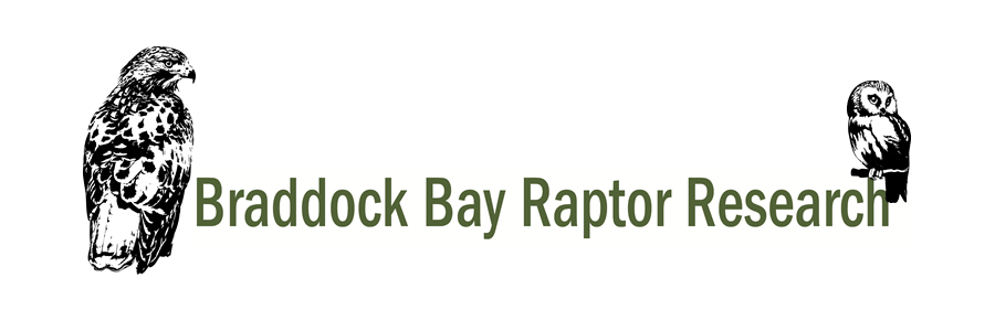 Braddock Bay Raptor Research